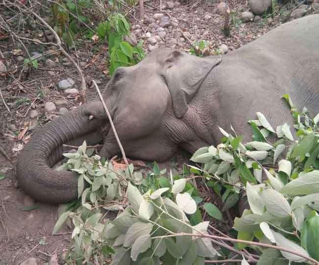 हाथी की मौत, हरकत में वन विभाग