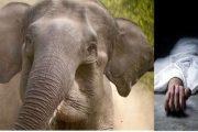 हल्द्वानी-हाथी ने महिला को कुचल कर मार डाला, ये रही लापरवाही