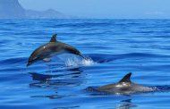 गंगा नदी की डॉल्फिन का संरक्षण है जरूरी