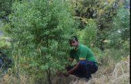 उत्तराखंड के इस युवक की मेहनत रंग लाई,  तैयार हुआ तीन साल में चंदन का वन