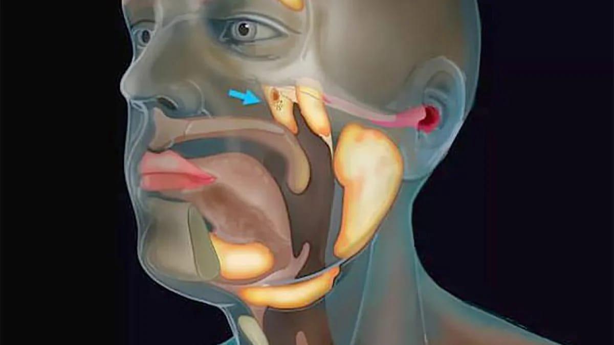 वैज्ञानिकों ने किया कमाल! इंसान के शरीर में मिला नया अंग,जो की बहुत लाभकारी है .