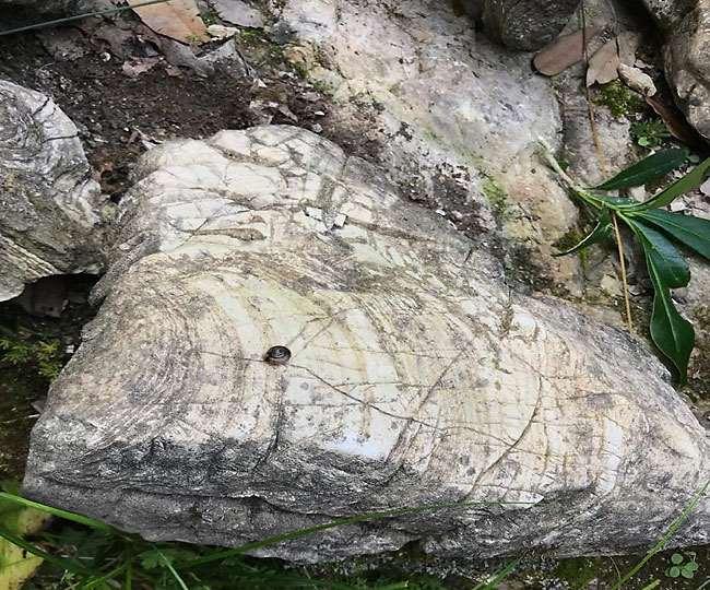 उत्तराखंड में टिहरी के प्रतापनगर स्थित पीड़ी पर्वत में मिला 50 करोड़ साल पुराना 'स्ट्रोमैटोलाइट