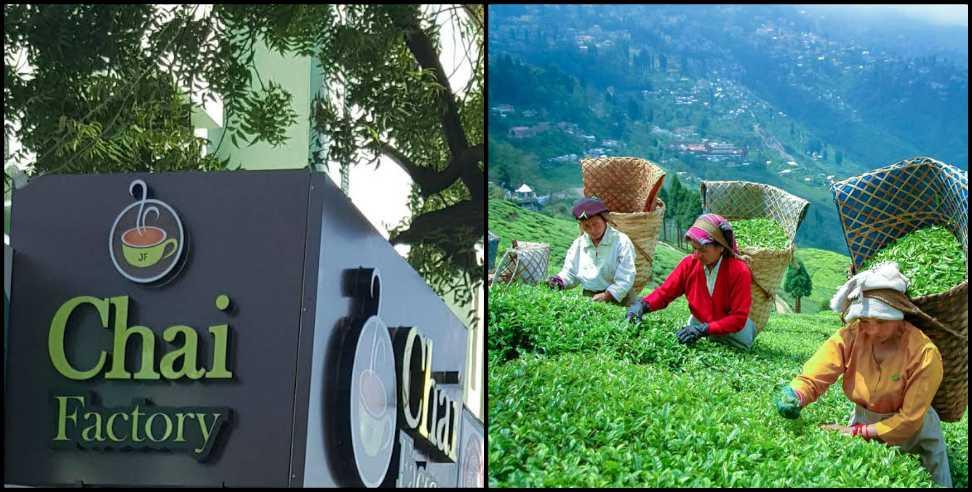 3 जगह लगेंगी चाय की फैक्ट्री, हजारों से ज्यादा लोगों को मिलेगा रोजगार...