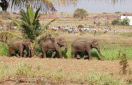 जोगीवाला माफ़ी में हाथी ने तोड़ी चाहरदिवारी...